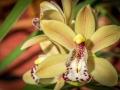 Orchidées-13.jpg
