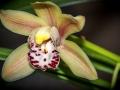 Orchidées-2.jpg