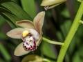 Orchidées-3.jpg