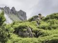 La Plagne, Marmottes
