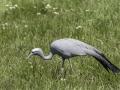 Parc des oiseaux/villars les dombes